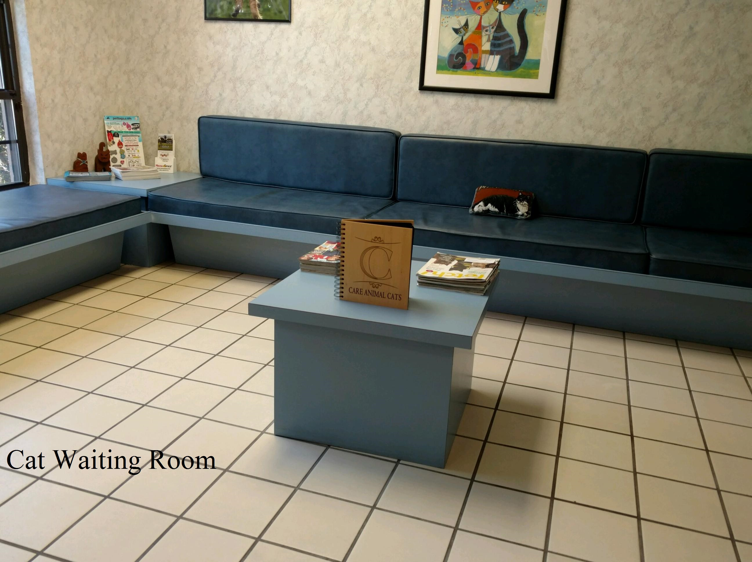 CAC CAT WAITING ROOM